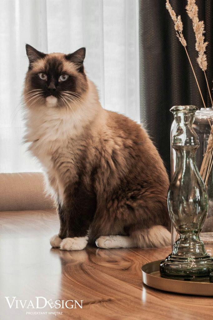 Kot Tomek, który był ozdobą sesji zdjęciowej w luksusowo urządzonym domu w Rzeszowie, projekt wnętrz przygotowany przez pracownię Viva Design z Rzeszowa, architekt wnętrz, Kraków, Krakow, projekty wnętrz, interior design, pod klucz
